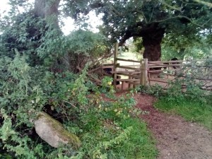 photograph with a disused stone step stile bottom left and a modern wooden stile in the background