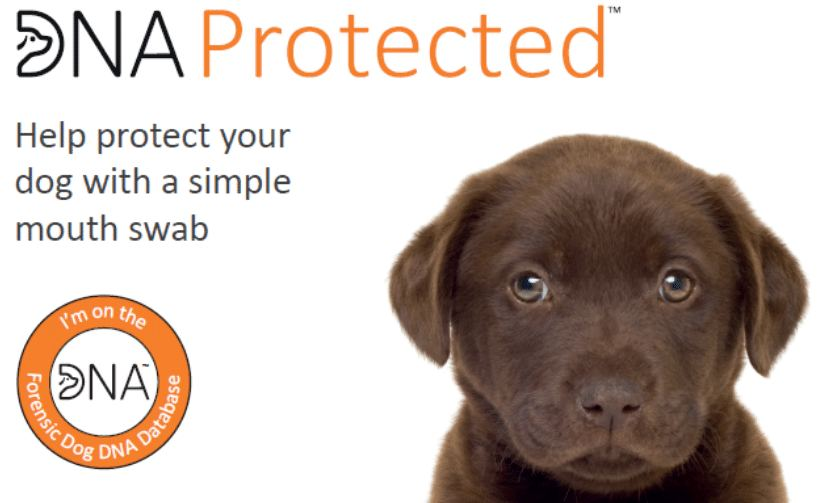Doggy DNA