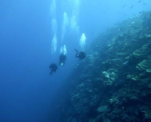 Stingray Divers - Tauchreise Apo Reef, Tauchen an Steilwand
