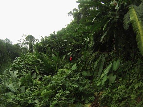Jurassic Jungle, walking Bonanza route, Bolita