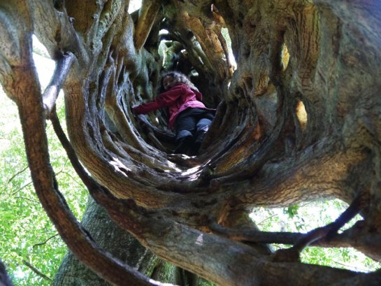 Alya, climbing inside a Ficus tree, Monteverde