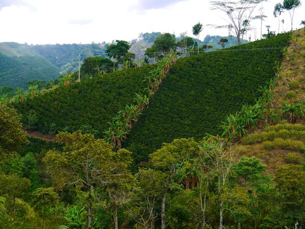 The coffee plantations around Salento is something to experience! Finca el Ocaso, Zona de cafeteria Backpacking Colombia