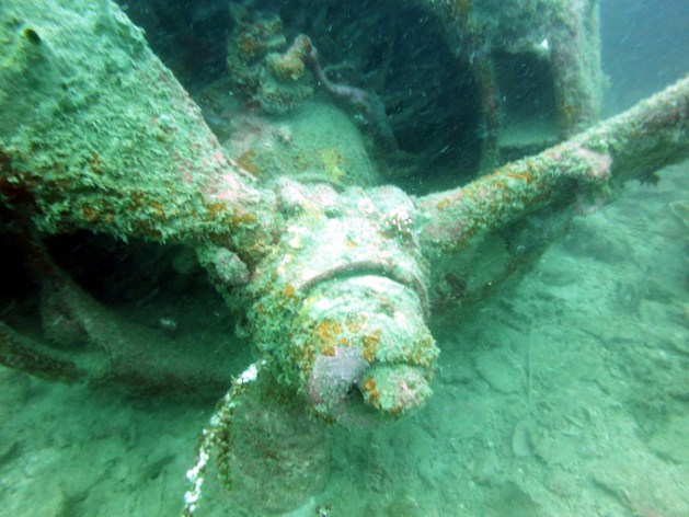 The B42 Bomber wreck from WWII was an interesting dive.