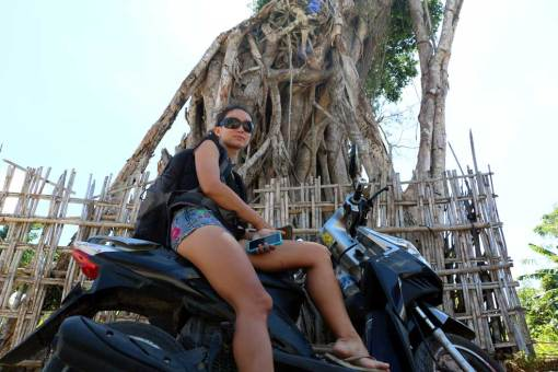 Holy tree somewhere on the way to Seganing waterfall. Nusa Penida backpacking guide