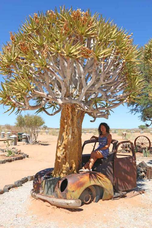 Alya in a rustic car with a tree in its boot at Canyon Roadhouse, Namibia