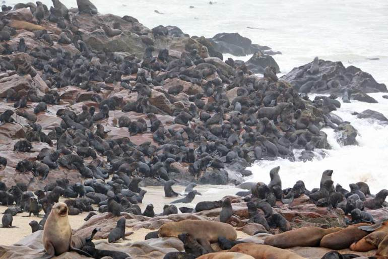 Cape Cross Seal Colony on the Skeleton Coast in Namibia