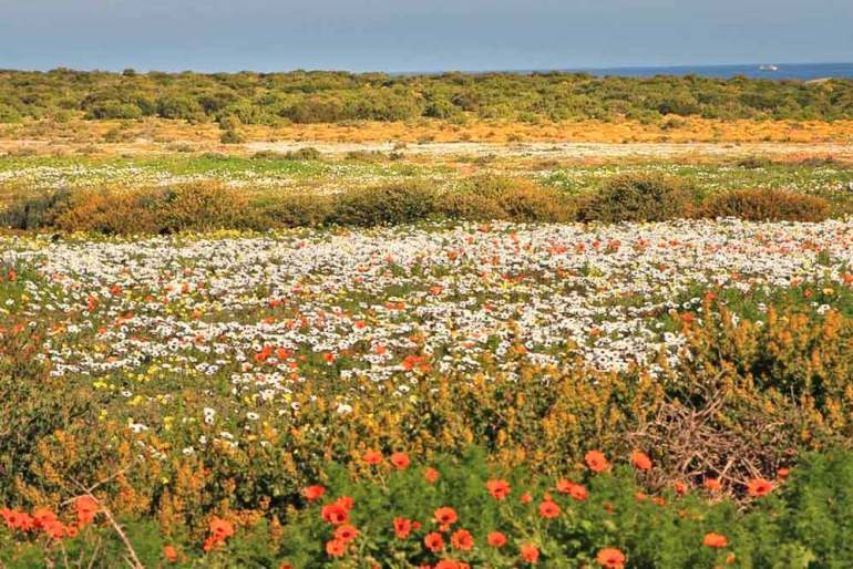 Namaqualand during the flower season in South Africa