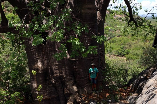 Campbell and a giant baobab tree, Ovahimba Living museum.