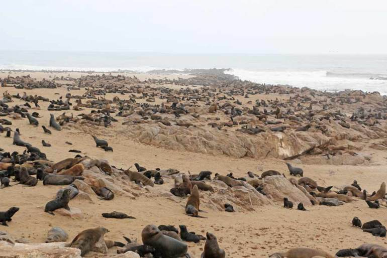 Seals at Cape Cross in Namibia