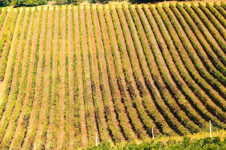 Vineyards around Stellenbosch, South Africa