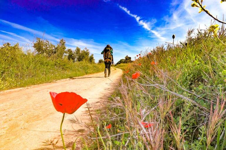 A typical scenery on the Via de la Plata; fields, gravel road, wildflowers