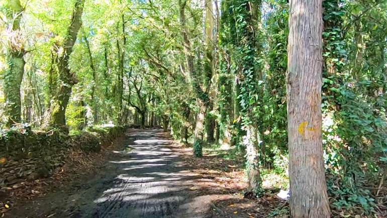 Galician forest on the Camino de Santiago