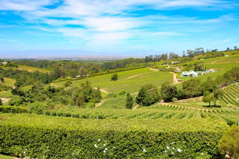 View over the vineyards of Constantia, Cape Town