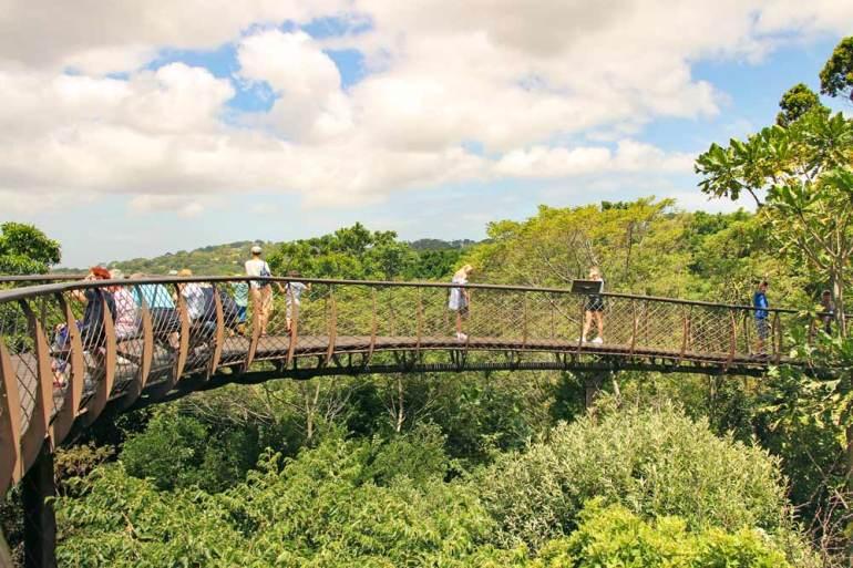 The walking bridge above the trees in Kirstenbosch Garden - not to miss in Cape Town