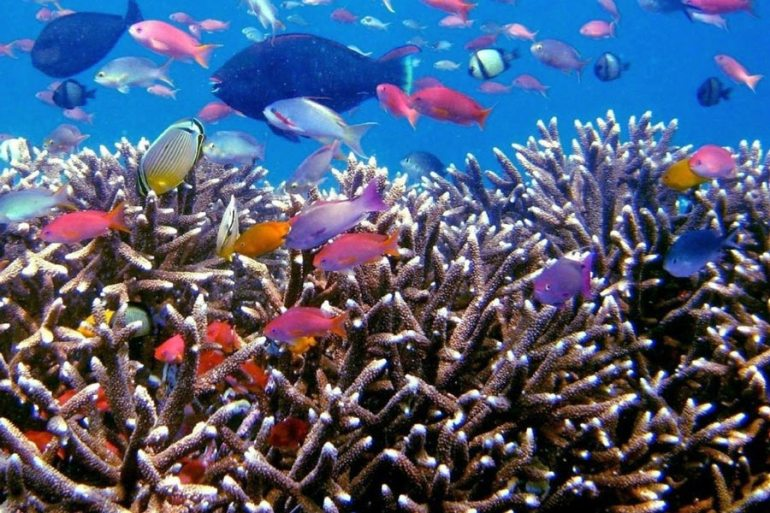colorful reef with plenty of fish