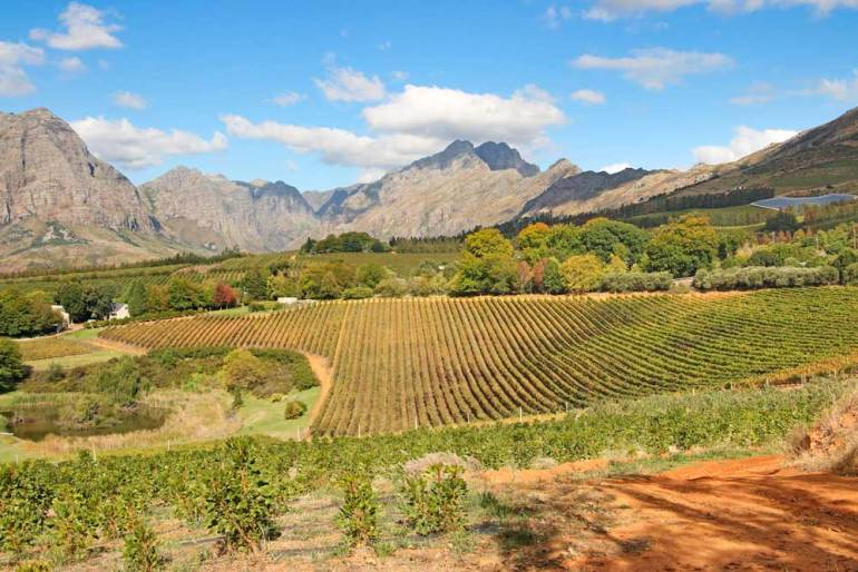 A green wine valley surrounded by the mountains in Stellenbosch, a great place for a wine tasting trip from Cape Town