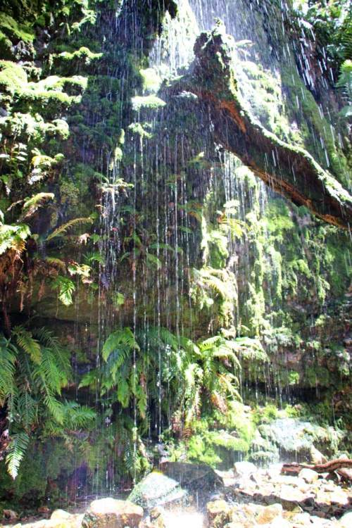 A waterfall on the Waterfall trail in Cecilia Forest