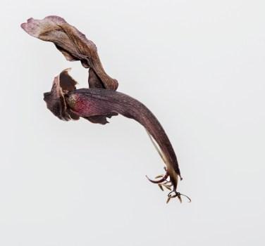 One fallen tube Flower