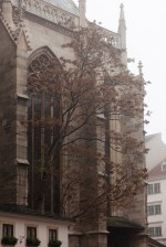 Tree at St Stephens cathedral