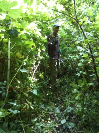 23 June 2012. William in the wilderness between the Japanese knotweed and fallen fruit tree.