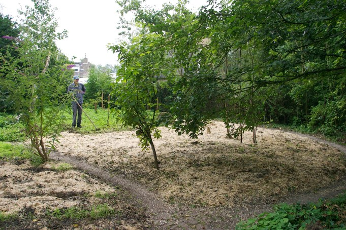 22 August 2013. Relief of the straw-covered bean-shaped bed of the former orchard.