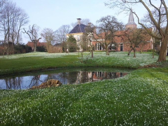 Snowdrops at the Weem in Warffum. The 'Snowdrop-free strip' is clearly visible. Photo: Tweet 12.03.2016. @marcoglastra, director Groninger Landschap
