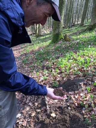 Loose soil structure of the mole's heap. Sloping forest with Bulbous Corydalis in Bad Iburg.