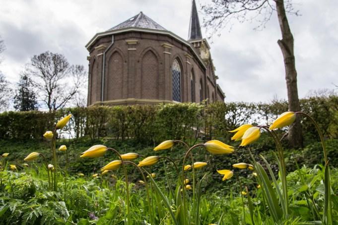 Bostulp langs de Swarte Singel buiten het kerkhof bij Martenastate