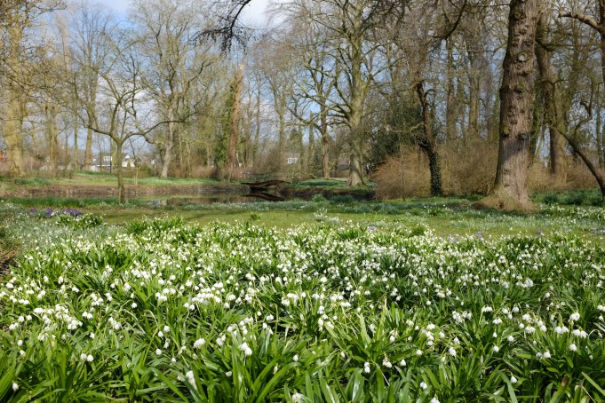 Snowdrops at Philippusfenne, a month earlier than last year.