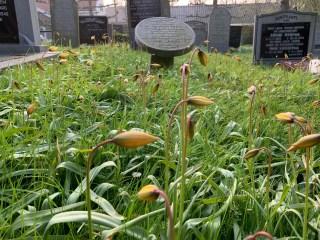 Bostulp kerkhof Ternaard.