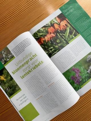 Artikel over stinzenplanten, IFG voorjaar 2020