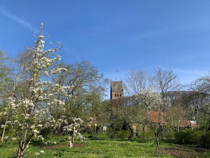 75 jaar bevrijding. Perenbomen in bloei bij Stinze Stiens.