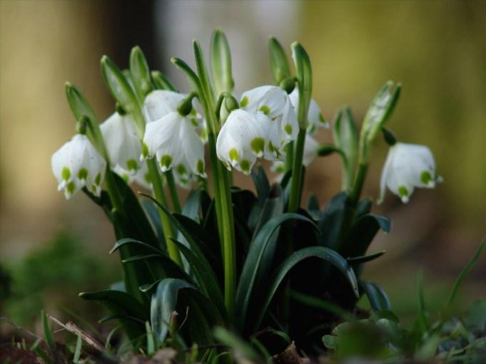 Snowflake. Photo: It Fryske Gea.