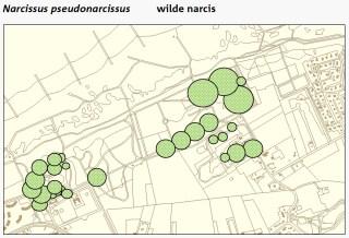 Locaties Wilde narcis in De Manteling bij Domburg.