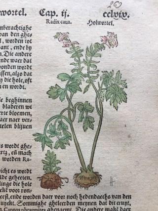Bulbous Corydalis in Dodonaeus, 1563