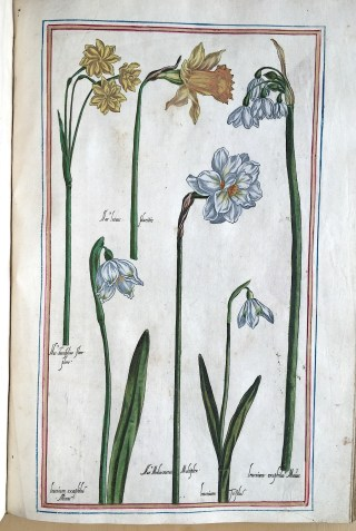 P. Vallet, J. Robin. Le jardin du Roi tres chrestien Henry IV, Roi de France et de Navarre, dédié a la Royne, 1608.