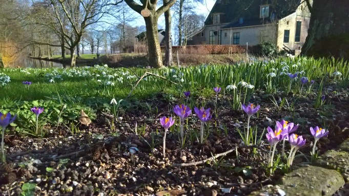Tommasini's Crocus and Snowdrops (Galanthus nivalis and var. 'pleno') at Dekema State.
