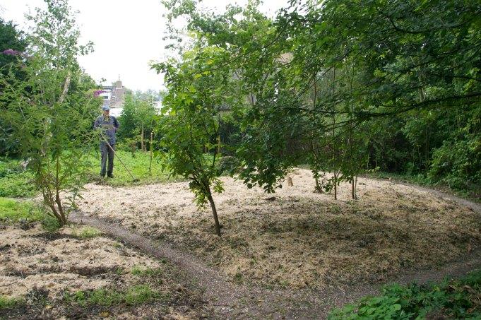 Afdekking met koolzaadstro in de boomgaard