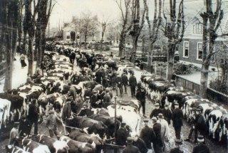 Veemarkt op de Pieter Jellessingel, Stiens