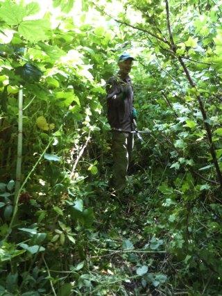 Willem in de wildernis