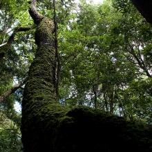 El Cedro - der Nebelwald
