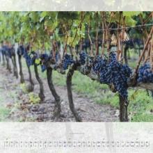 Septemberblatt Kalender 2015 –Elba