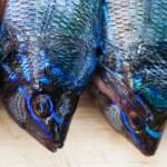 Die Fischer von Stromboli