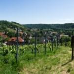 Steillagenweinbau mit Schweiß, Kosten und Empathie