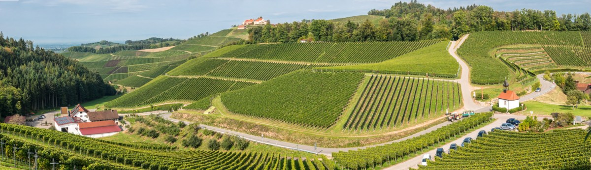 Weinhänge der Durbacher Winzer