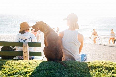 Sfaturi utile pentru bunastarea animalelor de companie 2