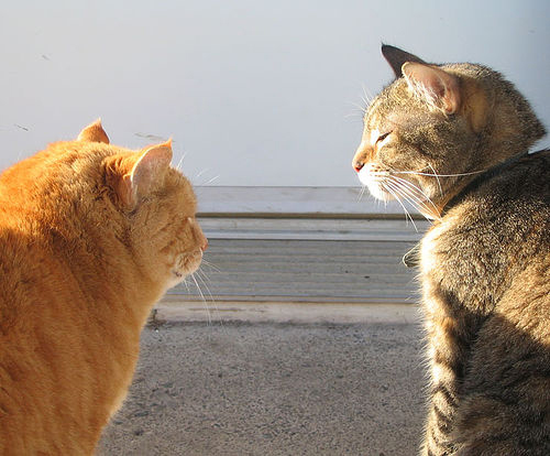 Cats Talking