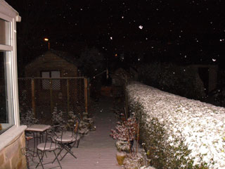 Snow in the garden at night