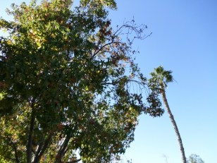 October Day in So Cal