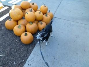 Pepper and Pumpkins
